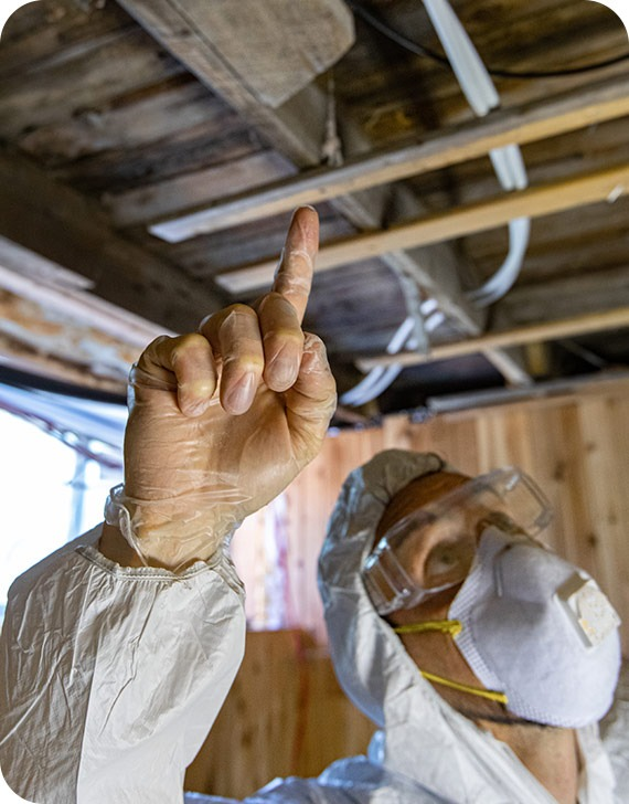 Air Qualisty Testing | MoldPro | Alberta Asbestos and Mold Removal Specialists