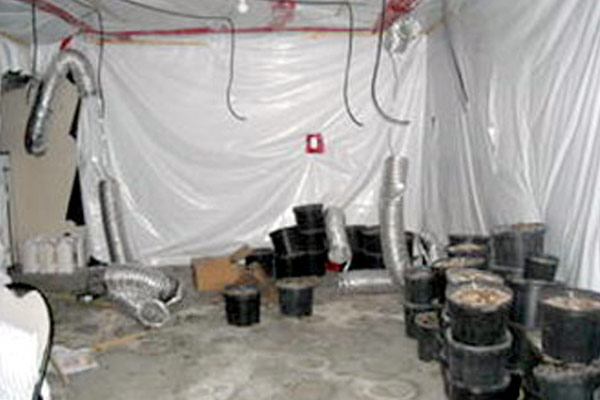 Grow-Ops Remediation | MoldPro | Alberta Asbestos and Mold Removal Specialists