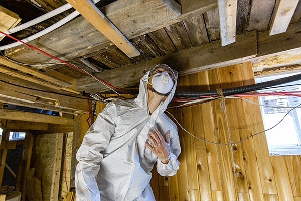 Mold Assessment | MoldPro | Alberta Asbestos and Mold Removal Specialists