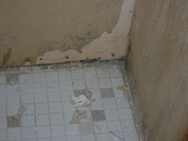 Mold Behind Tiled Wall | MoldPro | Alberta Asbestos and Mold Removal Specialists