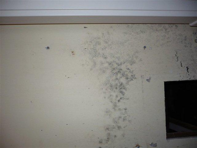 Mold on Wall | MoldPro | Alberta Asbestos and Mold Removal Specialists