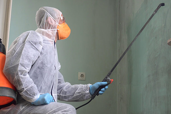Mold Inspections & Removal