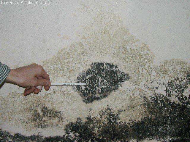 Mold Test | MoldPro | Alberta Asbestos and Mold Removal Specialists