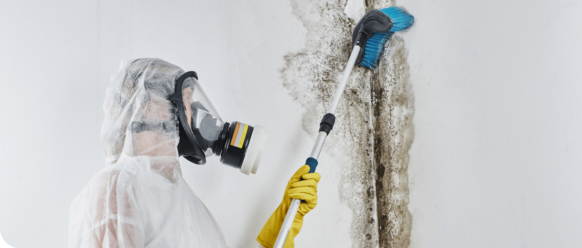 MoldRemoval | MoldPro | Alberta Asbestos and Mold Removal Specialists