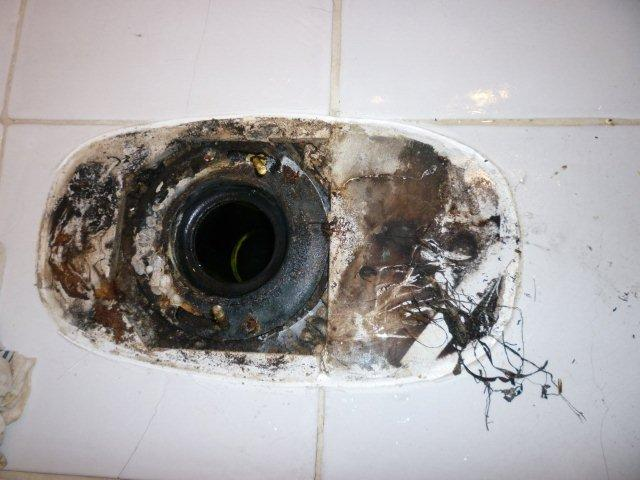 Mold Hiding Below Toilet | MoldPro | Alberta Asbestos and Mold Removal Specialists